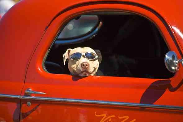 travelin' dog