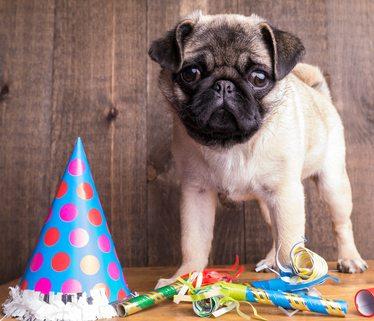 Pet Parties with Animal Communicator Coryelle Kramer