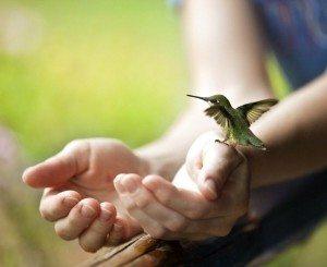 Hummingbird reiki