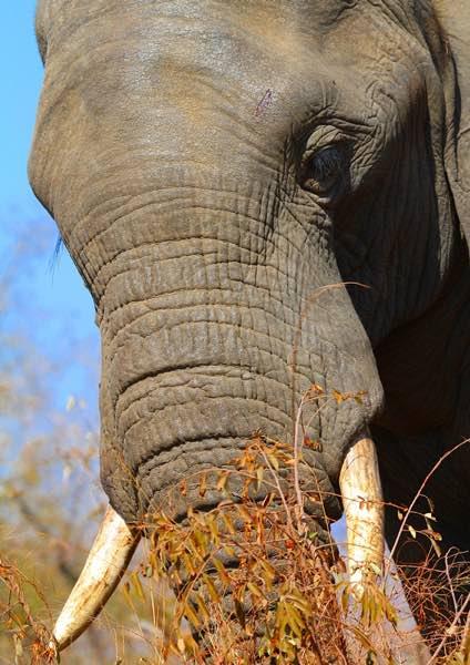 Attuning the Elelphants of the world2