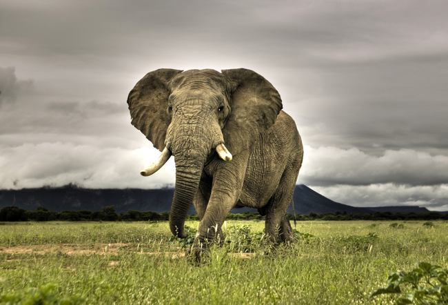 Attuning the Elephants of the world