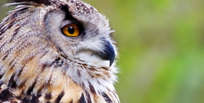 Attuning the Owls