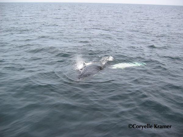 Whale eye image by Coryelle Kramer