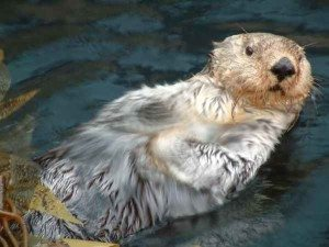 Attuning the Otters with Reiki Fur Babies