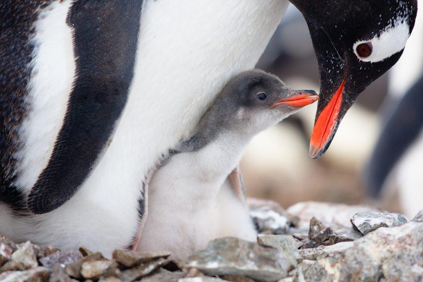 25 Penguin Photos from Antarctica  TripSavvy