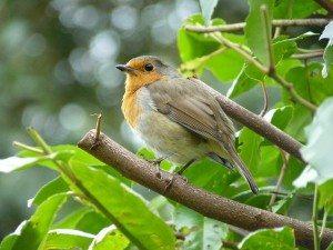 Songbird Attunement Coryelle Kramer