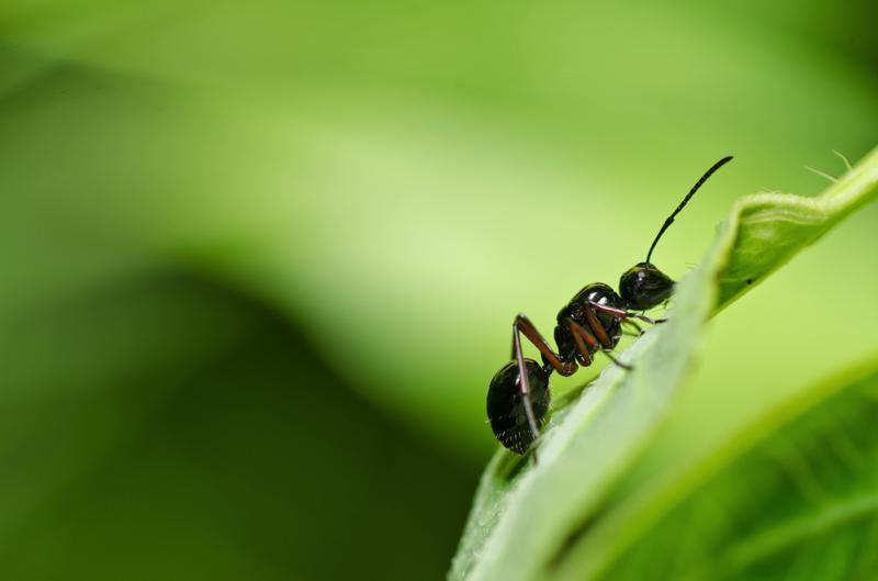 Attuning the Ants Coryelle Kramer