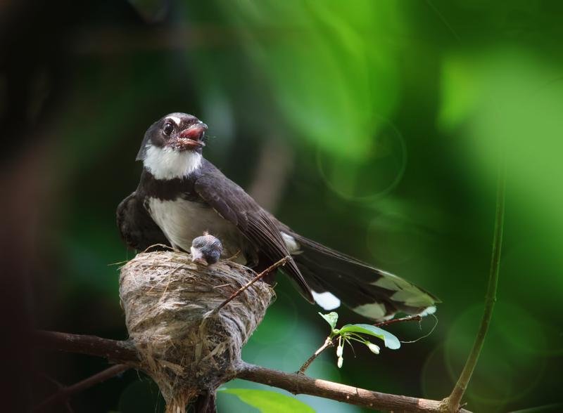 Attuning the Songbird Coryelle Kramer