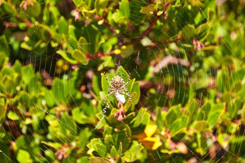 Attuning the Spider Coryelle Kramer