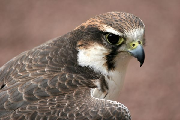 Falcon shows me that I'm worthy