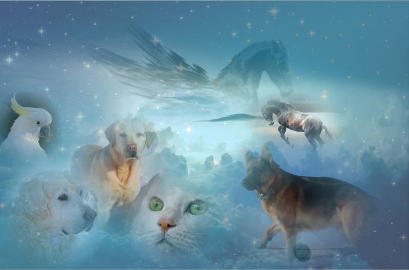 Animal reincarnation