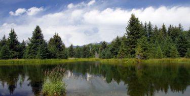 Honeycomb lake