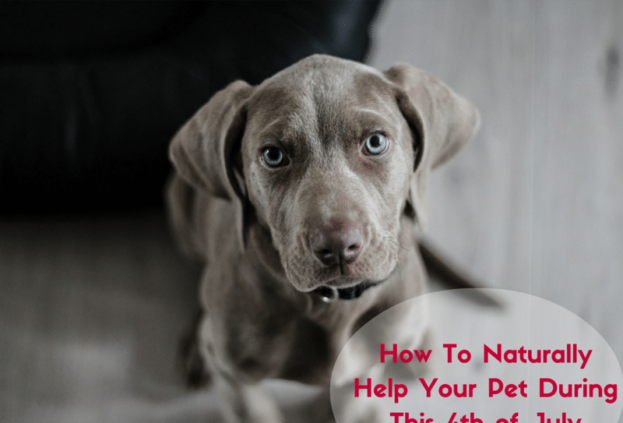 Naturally help your pet during the 4th of July