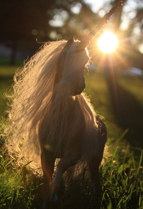 """""""I love living in my unicorn's world no matter what anyone says. if you don't believe that's ok, just don't expect me to leave my world for yours."""""""