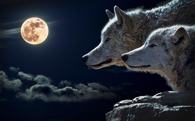 Wolf spirit - guide gathering cermony