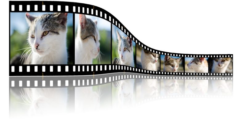 animal communication videos