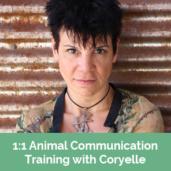 Animal-Communication-Training