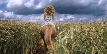 finding an animal communicator