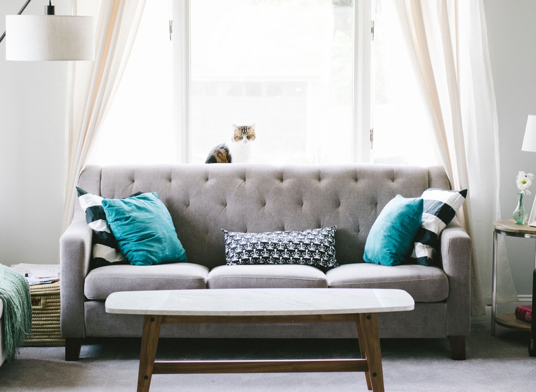 Pet Problems? Rearrange Your Furniture - Coryelle Kramer ...