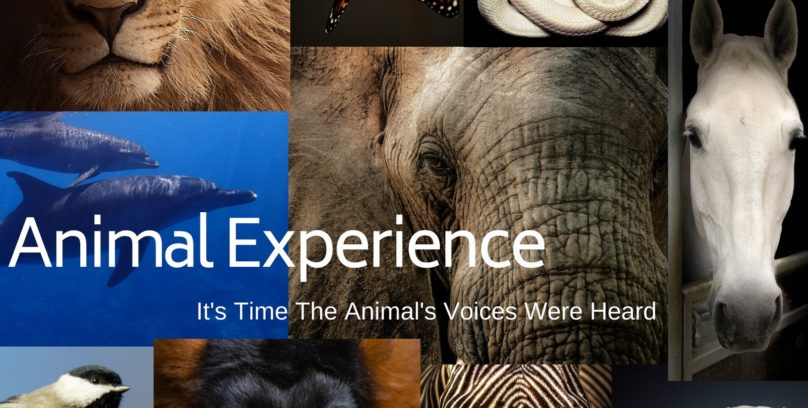 Animal Experience low res pod