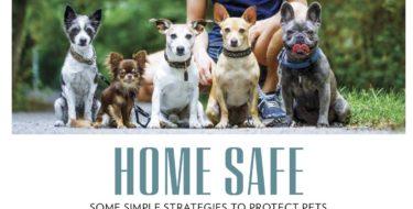 Pets article CBD header
