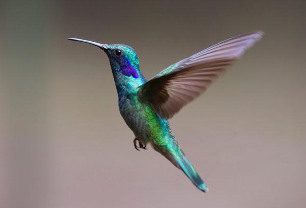 hummingbird #followyourbliss