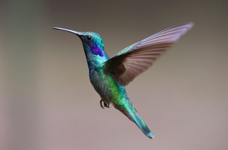 hummingbird #followyourbliss