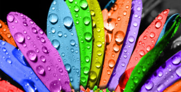 flower-rainbow-water-drops-colors-nature